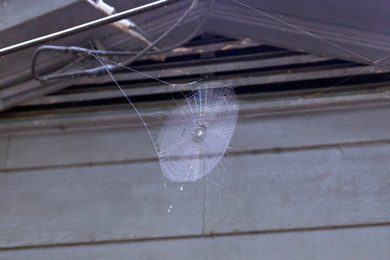 There's a smaller web in front of the garage.