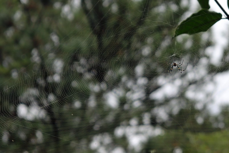 The detail of the upper web is impressive.