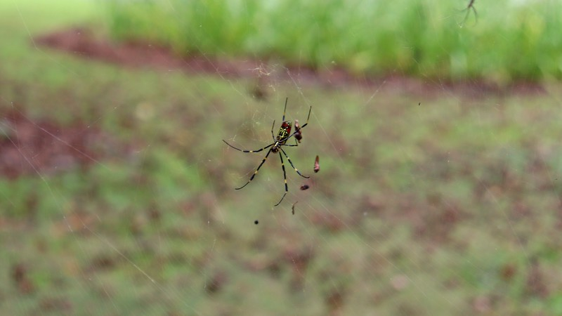 The photo above is of the lower web at the pear tree.
