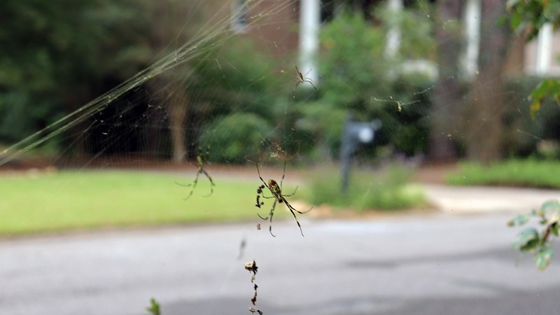Trying to focus on the forward spider, (didn't work too well).