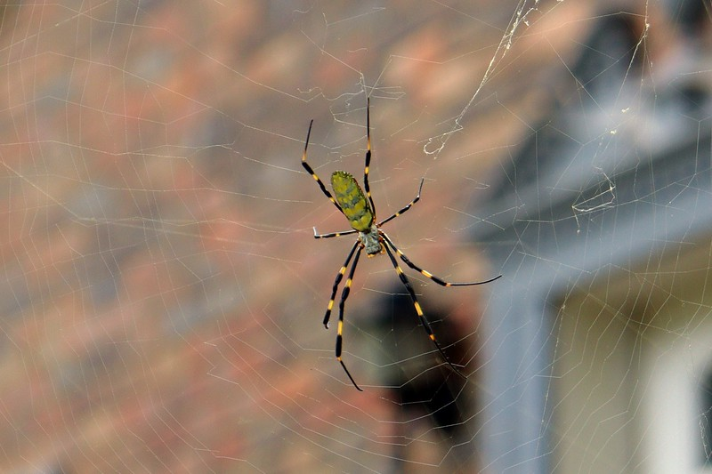Zooming in on the web architects has given me good practice using the manual focus setting on the lens.