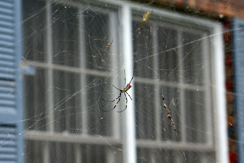 The web at the snowball is still in place.