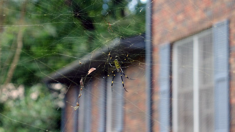 There is also an upper web.