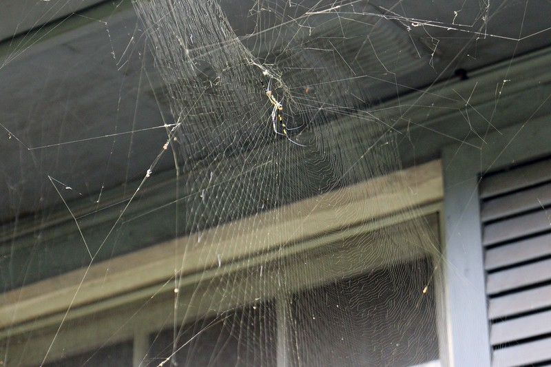 The large web next to the gutter.