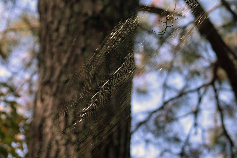 Another intricate web about 10 feet off the ground.