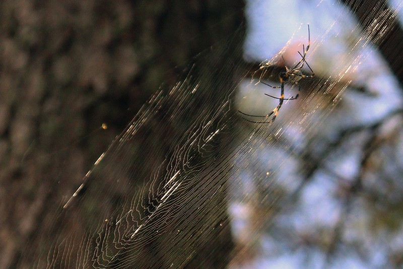 The other puzzling aspect of this web is the question of how did it get there.