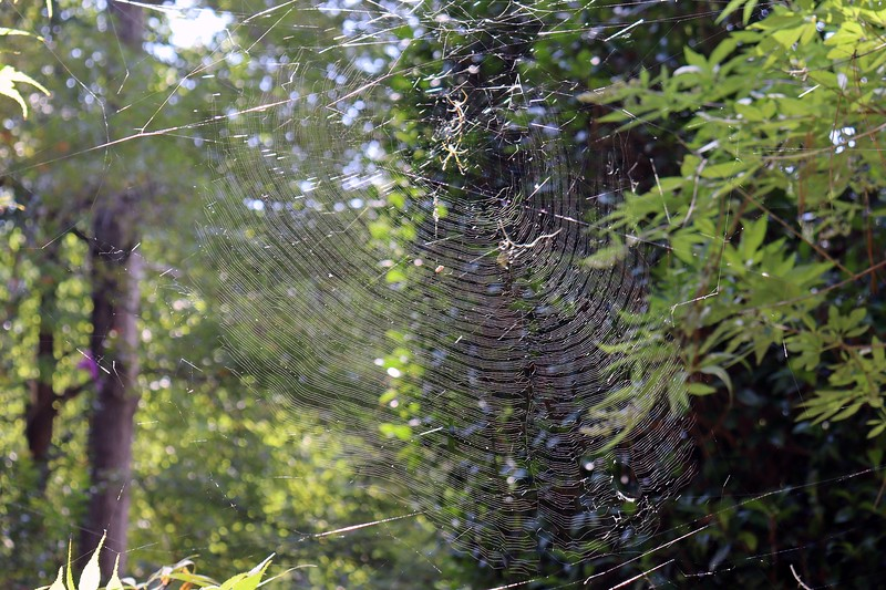 Another much larger web is next in line.