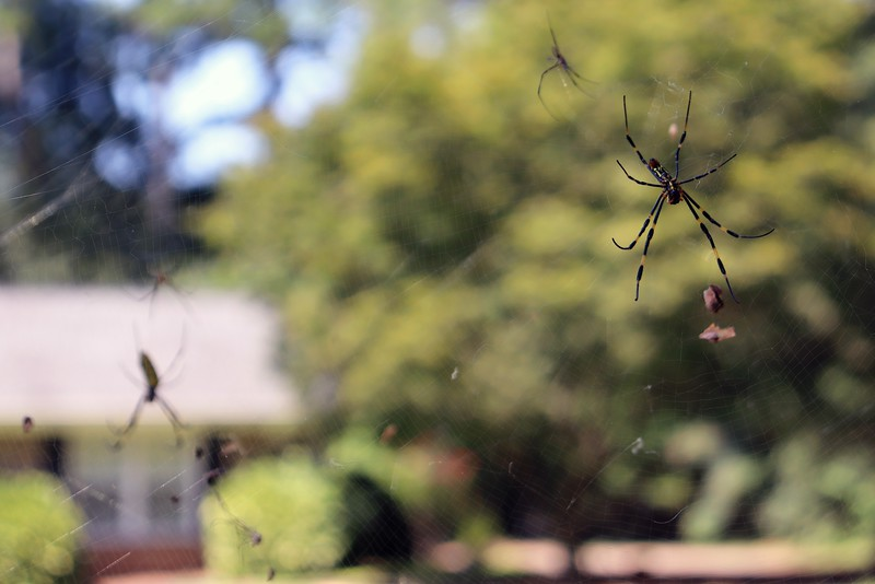 Focusing on the right spider.