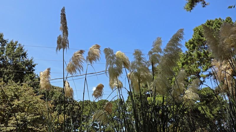 Pampas Grass near the mailbox.