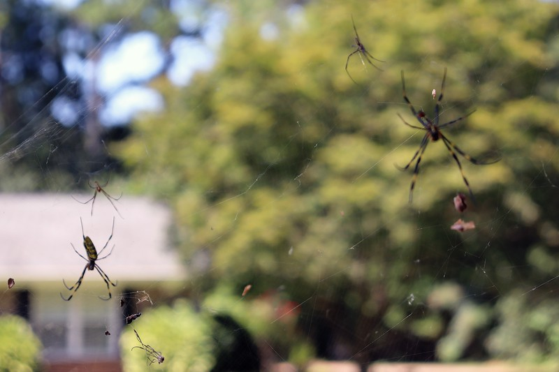 Focusing on the left spider.