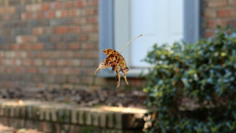 """Seeing a """"floating leaf"""" is a good indication that there's a web in place that you won't realize is there until you feel it hit your face and hair."""