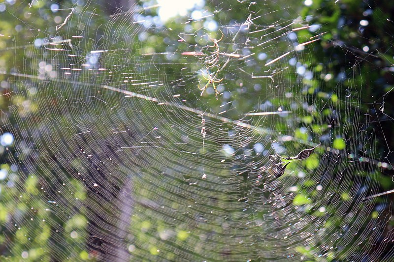 A very large web at the Vitex.