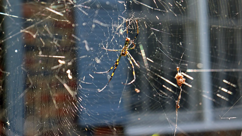 I'm still getting the hang of the manual focus mode.  The left side of the web looks ok while the spider is blurry.