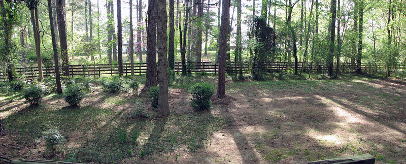 Two-picture backyard panorama.  I should probably move the daffodils and bluebells out of the middle of the grass.