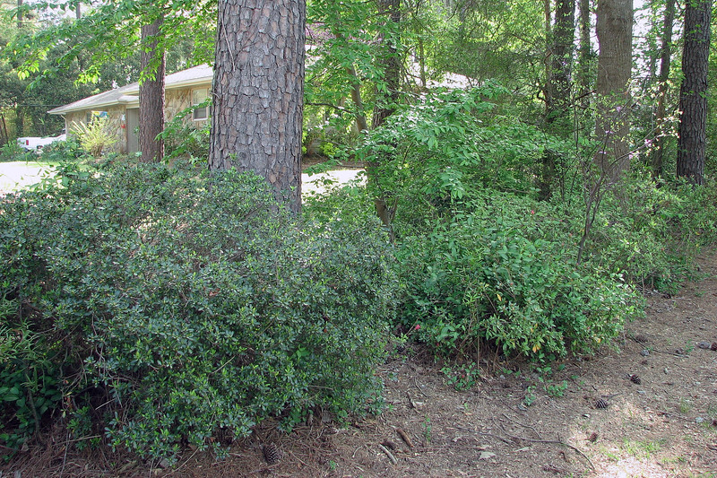 I don't see much activity on the other azaleas yet.
