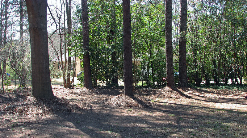 I spread the pine needles and other debris around the large trees in the backyard like I did out front.