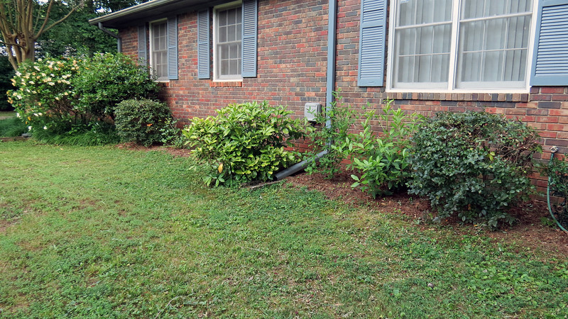 I gave the shrubs in front of the house a much needed trim.