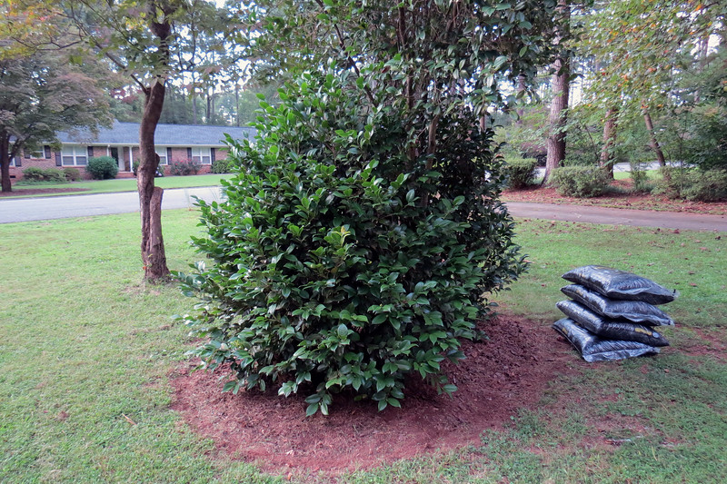 "Lowe's had mulch on sale over the weekend.  I took advantage of this opportunity to carve an ""island"" around the Japanese Camellia."