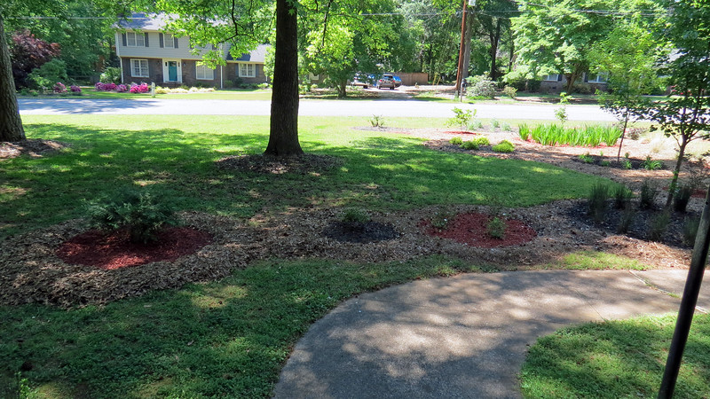The first order of business for today was to extend the homemade mulch border around the Leyland Cypress.  I added red mulch to keep the alternating pattern in place.