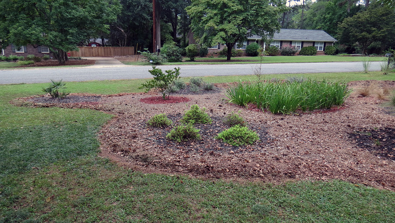 The goal is to surround the entire shape with homemade mulch.  As of this writing, I'm about 90 % complete.