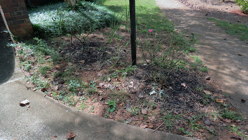 The rose bushes.  <br /> Success level:  Iffy at best.  <br /> <br /> This area has been a mess since I first tried to do something with it.  I started with a Blushing Knock Out Rose in April 2014.  The Double Knock Out Rose arrived the following month.  I've made several attempts at getting other plants to cooperate since then with varying levels of success:<br /> ~  Hameln Dwarf Fountain Grass:  All of them died.<br /> ~  Crocus, Tulips, and Alliums:  One of the few ideas that has done well.<br /> ~  Relocated Daffodils from the back yard:  Grew, but didn't flower.<br /> ~  Relocated Creeping Phlox:  Seems to be doing ok.<br /> ~  Mystery bulbs from a friend:  Still not sure what they are yet.<br /> <br /> But more than anything, I seem to have a bunch of weeds.  And I'm not sure what the taller plant is on the left side of the photo.  There are several of them in varying sizes, some of which flowered.