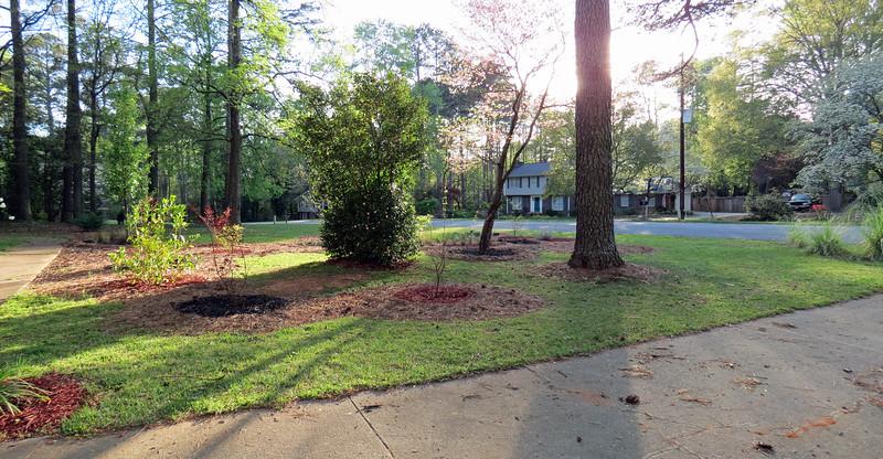Front yard panorama, April 2.