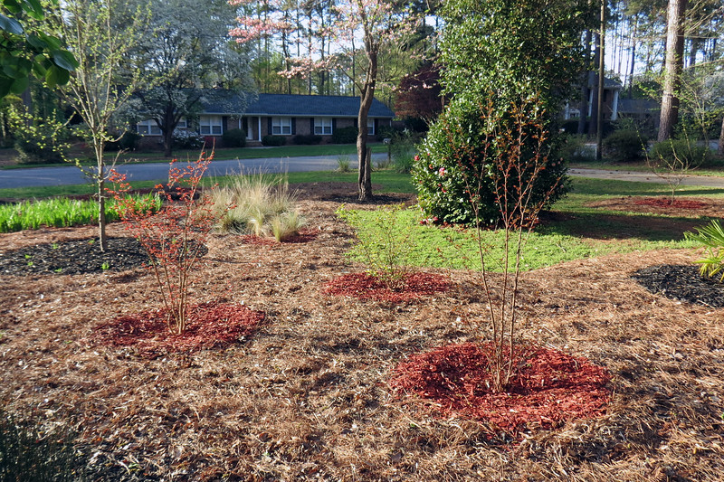 The three crape myrtles are also starting to wake up for the season.