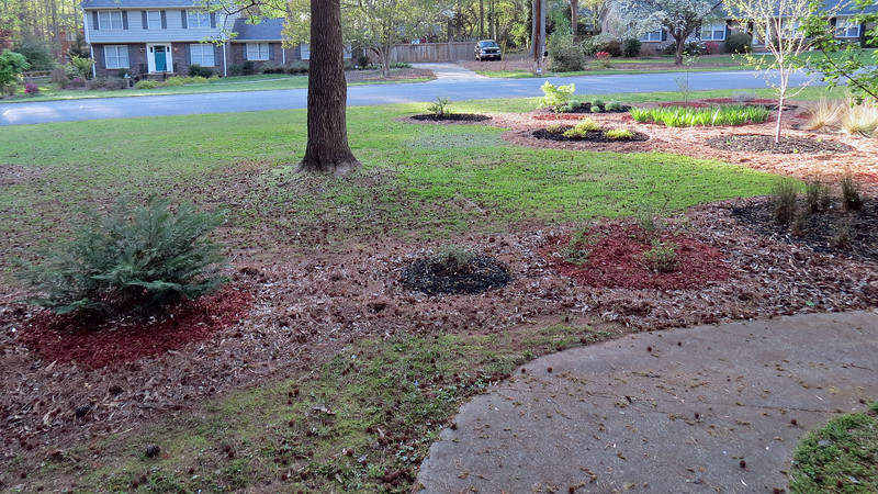 I've got a lot of cleaning up to do on this side of the yard as well.  The large Sweet Gum tree drops a bunch of those small grenades all over the place.  So my next project will be to adjust the lawn mower as low as I can and collect them in the mower bag.