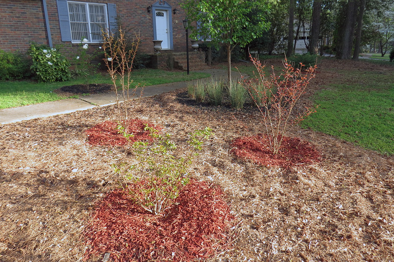 Crape Myrtles bloom over the summer which will give the yard some color at a time when color isn't normally present.