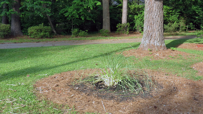 The mulch in place is actually what was there from last year.  So I'll add some fresh mulch later.