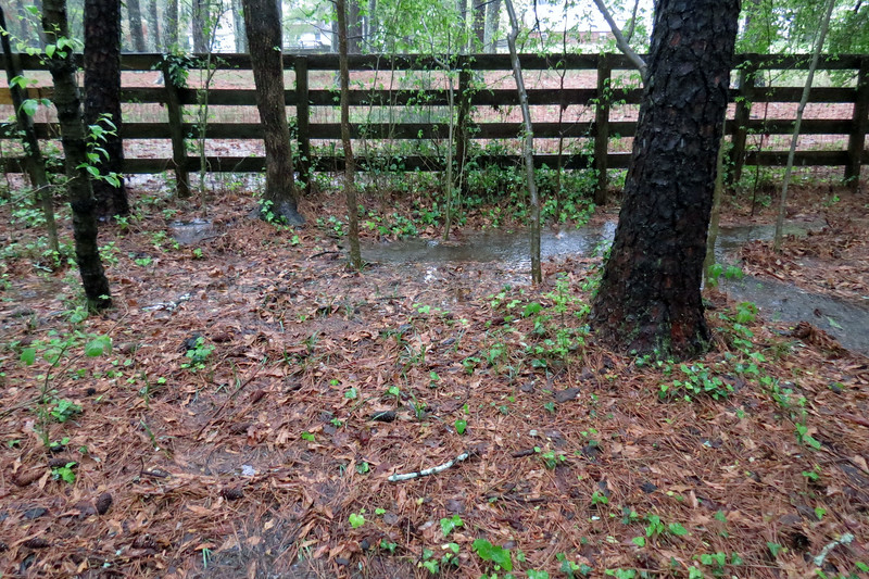 It's hard to tell from the photo above.  But the area in between the fence and the large tree is actually shaped like a valley and will collect water.  I have to wonder if this was done intentionally by a previous owner of my home for this very reason.