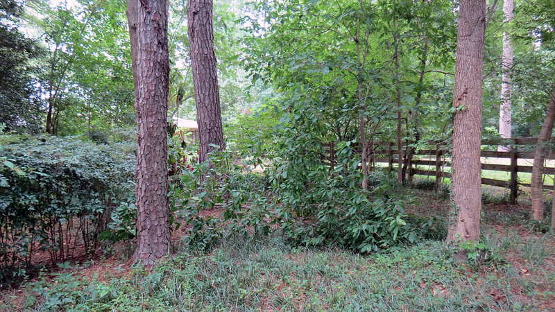 In the midst of taking the tree down by the driveway, I discovered a second tree down in the back yard by the fence.