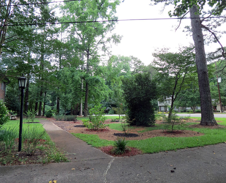 Front yard panorama, June 18, 2017.  The large amount of rain we've had this year means everything is growing and doing quite well.