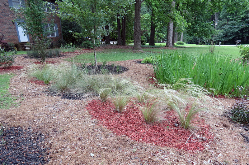 We've had quite a bit of rain around here lately.  The more Mother Nature waters my plants, the less I have to pay Athens-Clarke County to do it.  The Mexican Pony Tails Feather Grass and Pink Muhly Grass plants all look great.