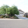 Yard April 2011<br /> Mesquite does need a trim