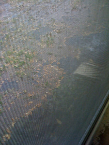Taken through the window.  The water is deeper than the downspout
