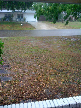 Yard swamp