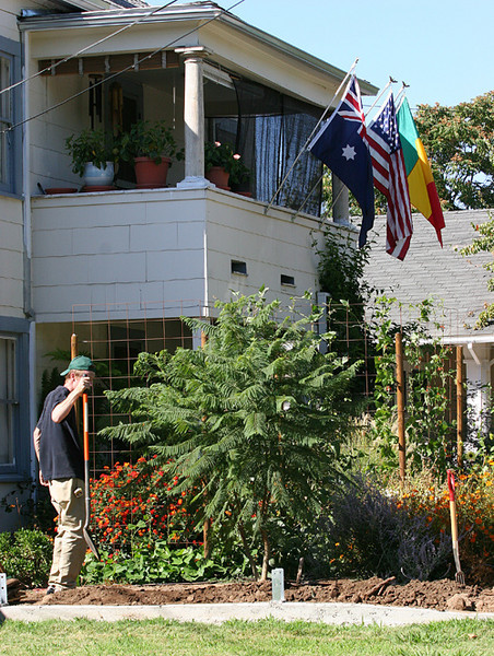 September 3, 2006:  Matthew McChesney admires his work on the planting of the Jacaranda tree.
