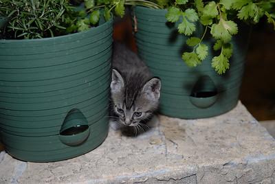 2007 04 12 - New Kitty 037