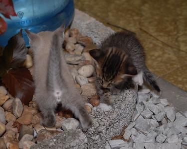 2007 04 12 - New Kitty 026