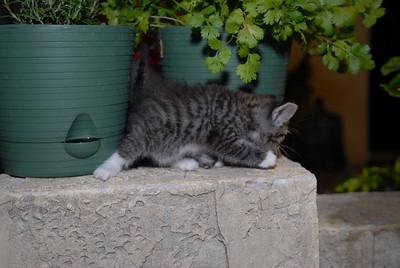 2007 04 12 - New Kitty 028