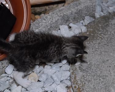 2007 04 12 - New Kitty 041