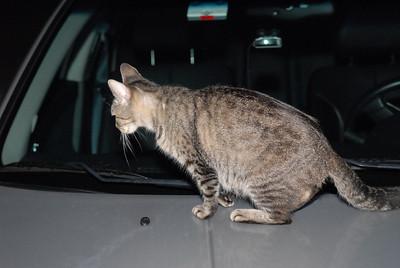 2007 04 12 - New Kitty 006