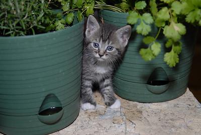 2007 04 12 - New Kitty 036