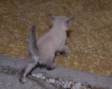 2007 04 12 - New Kitty 024