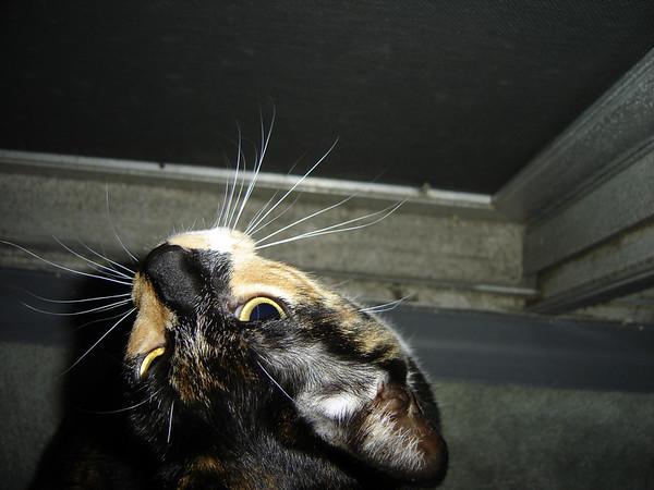2007 06 28 - Cats 10