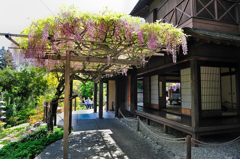 HL-Japanese Garden-6