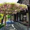 TH-Japanese Garden : Occupying nine acres on the slopes of a canyon, this is one of America's oldest, most elaborate, and gracefully matured Japanese gardens. A five-room house, pagodas and lanterns, and many mature plants were moved to the site from a commercial tea garden in Pasadena in 1912. A walled courtyard containing a rock and sand garden and a bonsai exhibition area was added in 1968. The garden boasts several beautiful forms of Japanese red pine, handsome spreading junipers, large cycads, arbors of wisteria, and thirty-foot-high sweet olives. (To be revisited many times.)