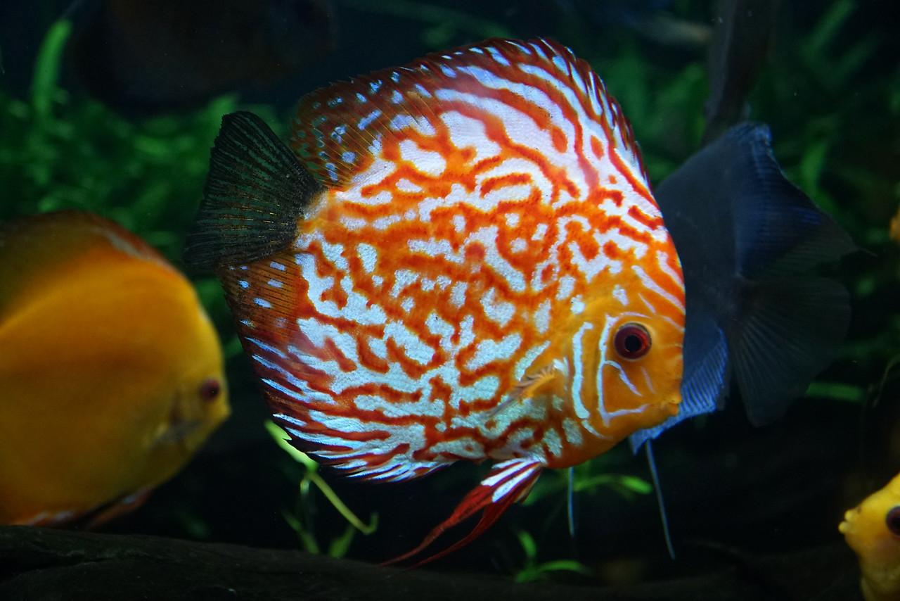 Aquarium Atlanta.  Pretty Fish.