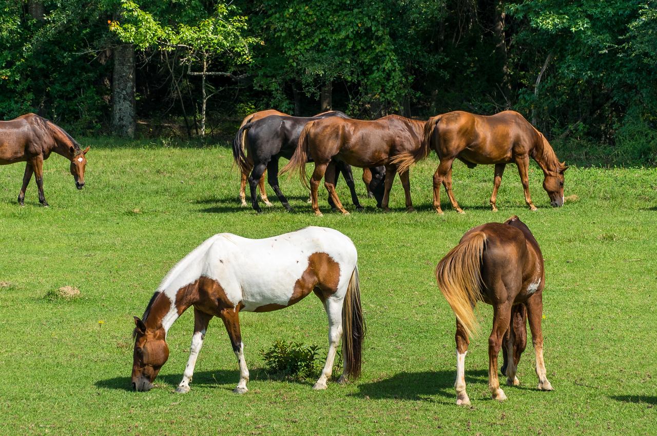 Natchez Trace Parkway, MS, MM 180 -- 9/21, 2:44 pm See?  Horses.  No, NOT seahorses.  Horses.  Land horses.